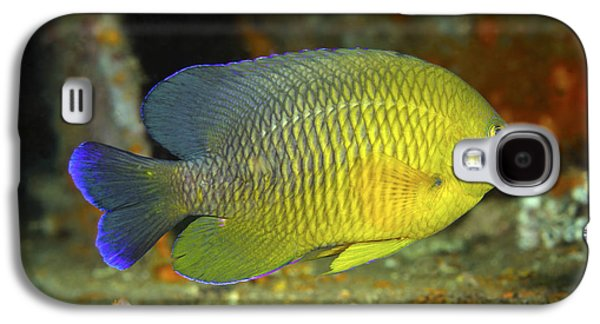 A Dusky Damselfish Offshore From Panama Galaxy S4 Case