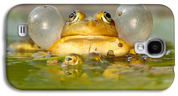 A Frog's Life Galaxy S4 Case by Roeselien Raimond