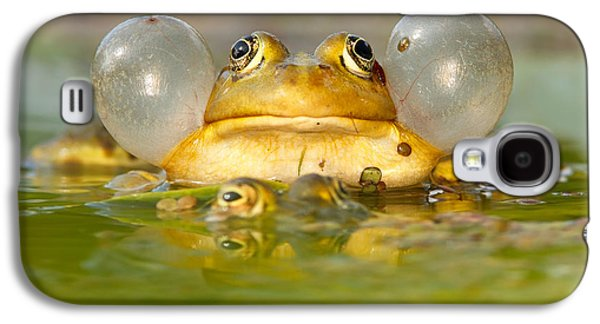 Frogs Galaxy S4 Case - A Frog's Life by Roeselien Raimond