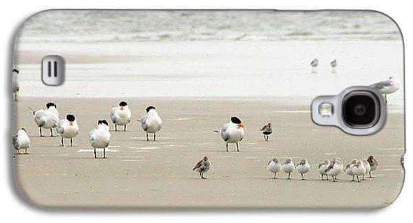 A Gaggle Of Seabirds Galaxy S4 Case