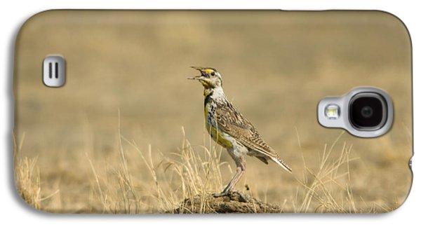 A Juvenile Western Meadowlark Galaxy S4 Case