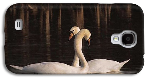 Galaxy S4 Case - A Painting Of A Pair Of Mute Swans by John Edwards
