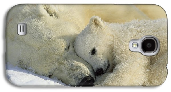 Polar Bear Galaxy S4 Case - A Polar Bear And Her Cub Napping by Norbert Rosing
