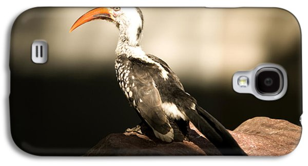 A Red-billed Hornbill At The Lincoln Galaxy S4 Case