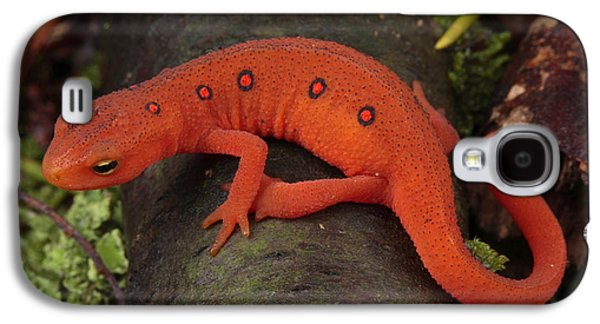 A Red Eft Crawls On The Forest Floor Galaxy S4 Case