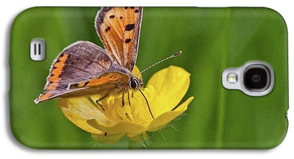 Galaxy S4 Case - A Small Copper Butterfly (lycaena by John Edwards