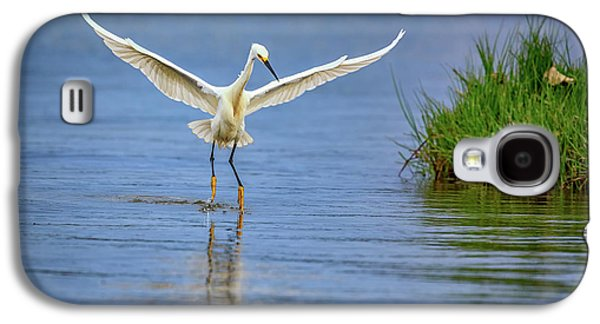 A Snowy Egret Dip-fishing Galaxy S4 Case by Rick Berk
