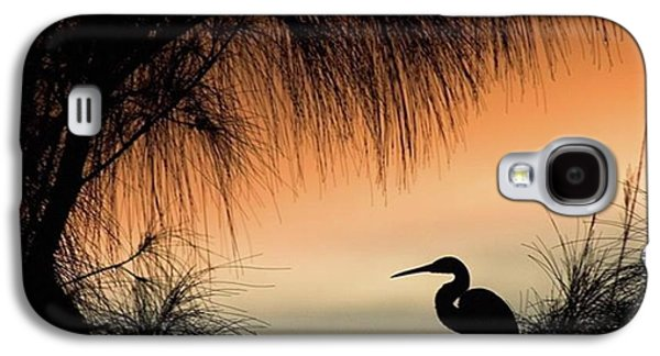 Galaxy S4 Case - A Snowy Egret (egretta Thula) Settling by John Edwards