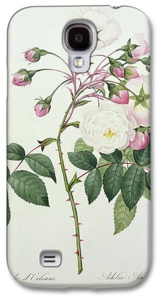Botanical Galaxy S4 Cases - Adelia aurelianensis Galaxy S4 Case by Pierre Joseph Redoute
