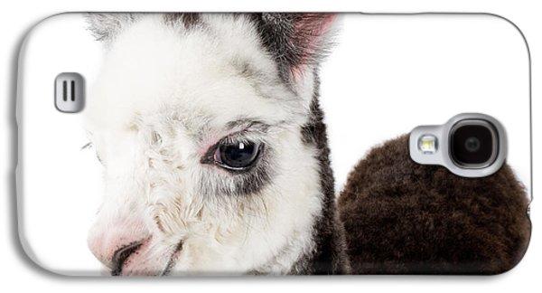 Adorable Baby Alpaca Cuteness Galaxy S4 Case by TC Morgan