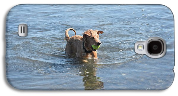 Adorable Face Of A Nova Scotia Duck Tolling Retriever Galaxy S4 Case by DejaVu Designs