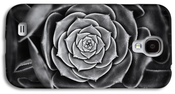 Aeonium Arboreum Galaxy S4 Case by Tim Gainey