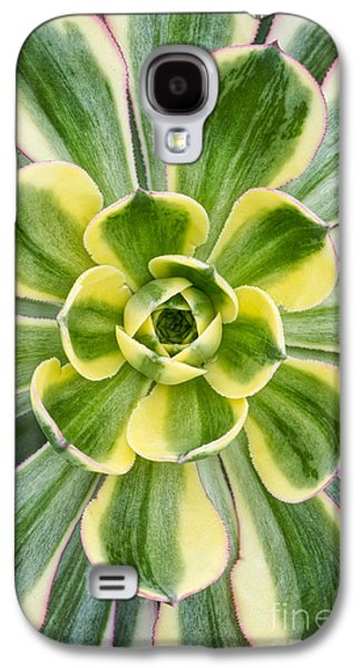 Aeonium Sunburst Galaxy S4 Case by Tim Gainey