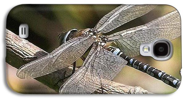 Galaxy S4 Case - Aeshna Juncea - Common Hawker Taken At by John Edwards
