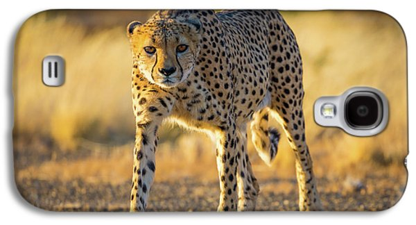 African Cheetah Galaxy S4 Case by Inge Johnsson