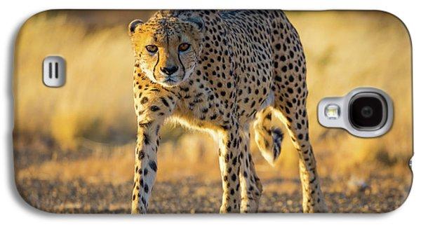 African Cheetah Galaxy S4 Case