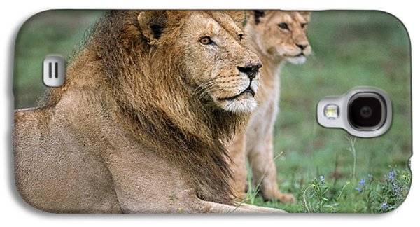African Lion Panthera Leo With Its Cub Galaxy S4 Case by Panoramic Images