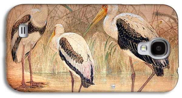 African Tantalus Pseudotantalus Ibis Galaxy S4 Case