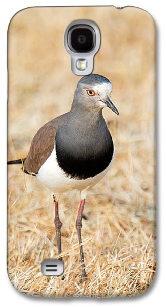 African Wattled Lapwing Vanellus Galaxy S4 Case