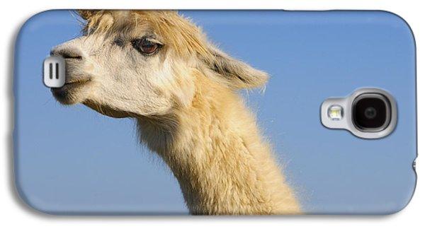 Alpaca Galaxy S4 Case by Skip Hunt