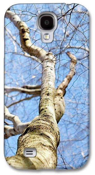 American Beech Tree Galaxy S4 Case by Christina Rollo