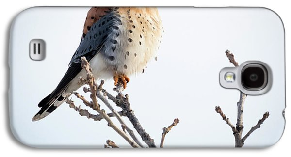 American Kestrel At Bender Galaxy S4 Case