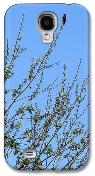 American Kestrel Atop Pecan Tree Galaxy S4 Case