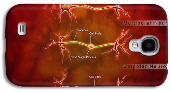 Anatomy Structure Of Neurons Galaxy S4 Case by Stocktrek Images