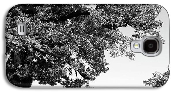 Ancient Oak, Bradgate Park Galaxy S4 Case