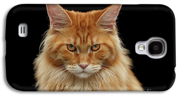 Cat Galaxy S4 Case - Angry Ginger Maine Coon Cat Gazing On Black Background by Sergey Taran