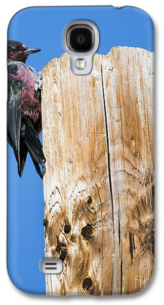 Any Tree Will Do Galaxy S4 Case by Mike Dawson