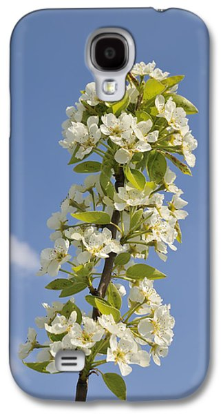 Apple Blossom In Spring Galaxy S4 Case