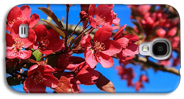Apple Blossoms #2 Galaxy S4 Case by Laurie Breton