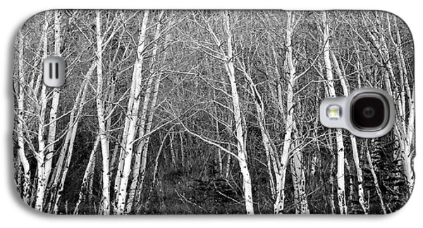 Aspen Forest Black And White Print Galaxy S4 Case