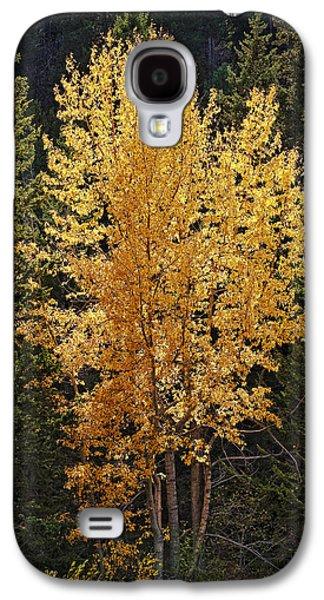 Kelley King Galaxy S4 Cases - Aspen Gold Galaxy S4 Case by Kelley King