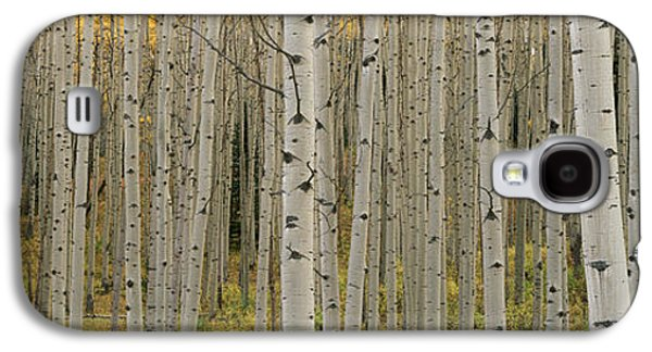 Design Pics - Galaxy S4 Cases - Aspen Grove In Fall, Kebler Pass Galaxy S4 Case by Ron Watts