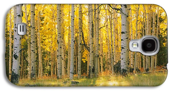 Aspen Trees In A Forest, Coconino Galaxy S4 Case by Panoramic Images