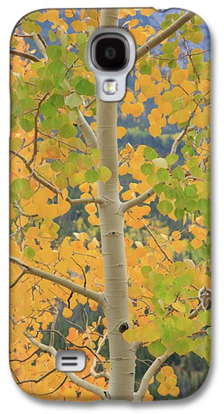 Aspen Watching You Galaxy S4 Case by David Chandler