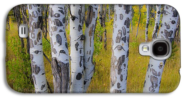 Galaxy S4 Case featuring the photograph Aspens by Gary Lengyel