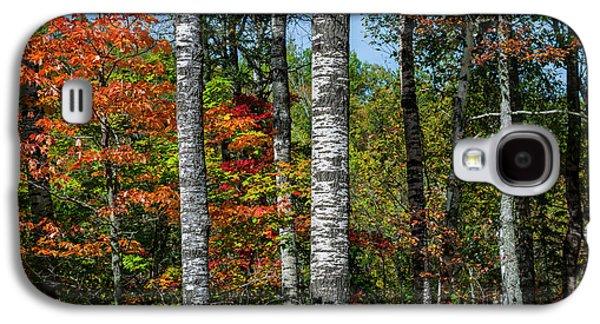 Aspens In Fall Forest Galaxy S4 Case by Elena Elisseeva