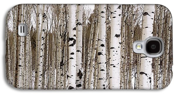 Aspens In Winter Panorama - Colorado Galaxy S4 Case by Brian Harig