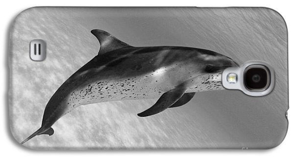 Atlantic Spotted Dolphin Galaxy S4 Case by Dave Fleetham - Printscapes
