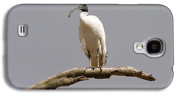 Australian White Ibis Perched Galaxy S4 Case