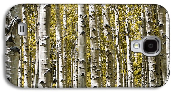 Autumn Aspens Galaxy S4 Case
