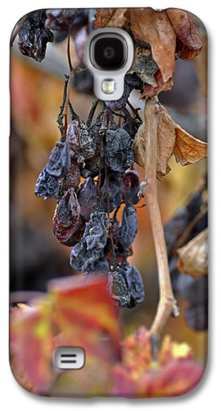 Galaxy S4 Case featuring the photograph Autumn At Lachish Vineyards 4 by Dubi Roman