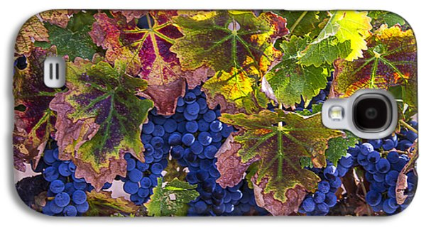 autumn Grapes Galaxy S4 Case by Garry Gay