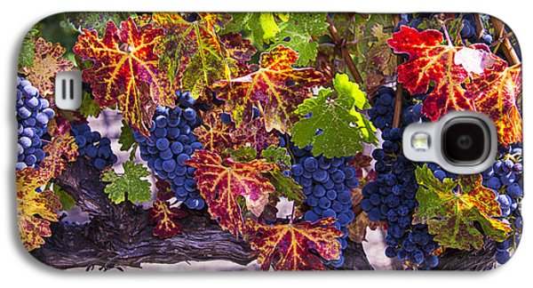 Autumn Grapes Harvest Galaxy S4 Case by Garry Gay