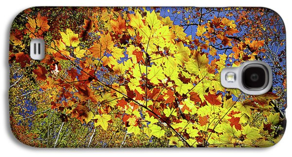 Autumn Light Galaxy S4 Case