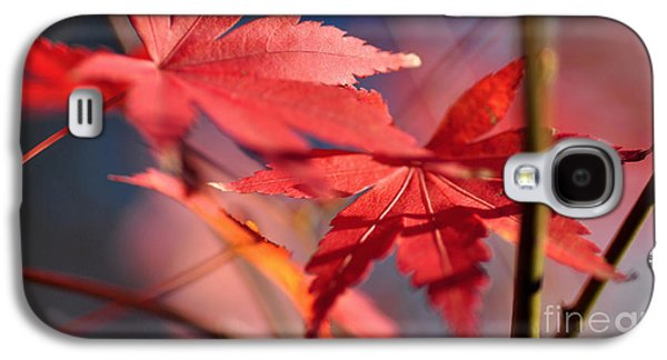 Autumn Maple Galaxy S4 Case