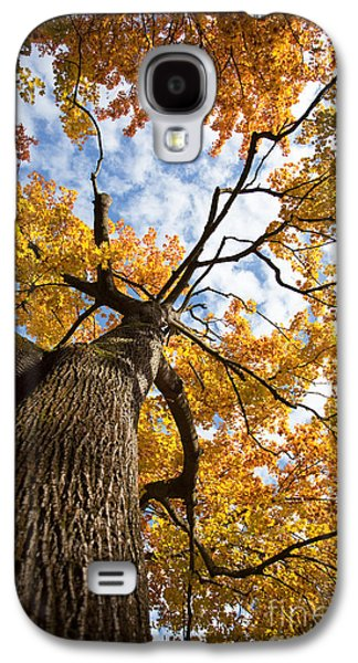 Autumn Tree Galaxy S4 Case by Nailia Schwarz